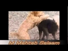 DOG TRYING TO GET ON TOP OF THE OTHER DOG
