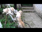 Daily Fails: Two Crazy Cats Epic Fighting (Funny) ►P75017