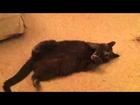Cute cat showing her cuteness.mov