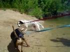 Basset Hound / Australian Shepherd Mix - ADOPT ME!