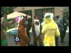 FURBQ News Report 7/3/12