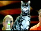 Bacardi Breezer Commercial with Cat