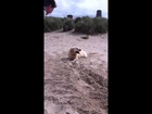 Really funny dog digging up beach MUST watch