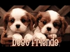 Best Friends!! ;))