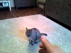 CUTE Cat Playing Dead after a finger shot!!!