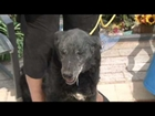 06/29/2012 West Star Ranch Animal Rescue Save-A-Pet Segment