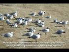 Martı - Itzhak Perlman - When the Rebbe Elimelech becomes...