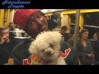 DJ Biscoto nouvelle star du métro en promo pour Annabelle