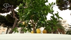 Fiat 500 Lemon Tree - Design & Style at Capri | FTV