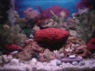 aquarium tips and equipments | PopScreen