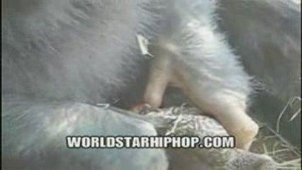 Se faire tirer une pipe au Zoo !!! | PopScreen