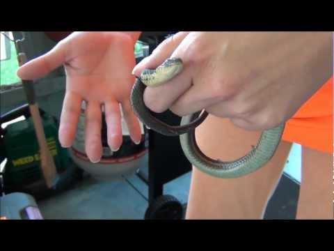 Snake bites woman | PopScreen
