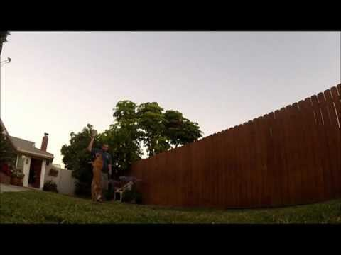 Go Pro Slow Motion Frisbee and Jumping action with my dog Houka | PopScreen