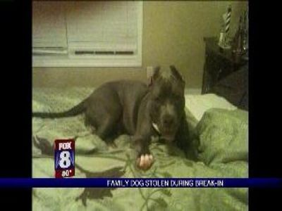 Family Dog Stolen During Home Break-In | PopScreen
