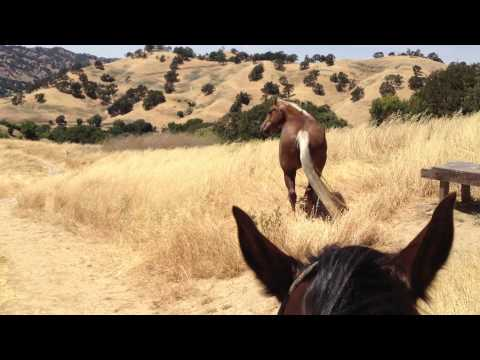 Loose Horse trying to Push & Control a Higher Horse - Rick Gore Horsemanship | PopScreen