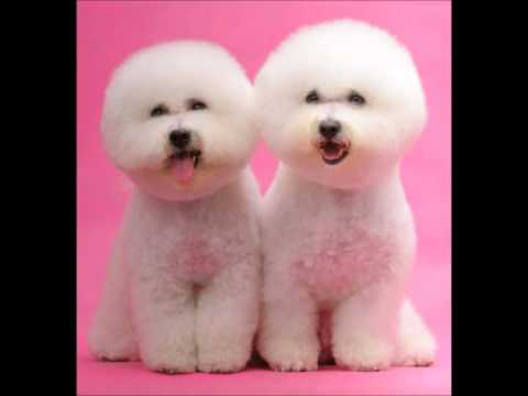 Cutest Dog Breeds in The World Cutest Dog in The World Breed