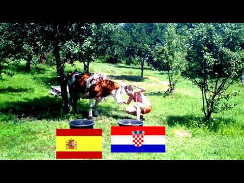 Cow Stefana predicts winner of the match: Spain vs. Croatia - EURO 2012 | PopScreen