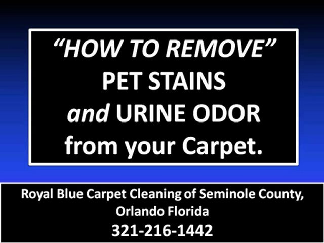 How To Remove Cat And Dog Urine Odor From Carpet Remove ...