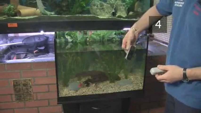 Man swims in hotel lobby fish tank popscreen for How to maintain fish tank