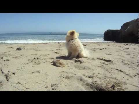 A day at the beach with moe the dog | PopScreen