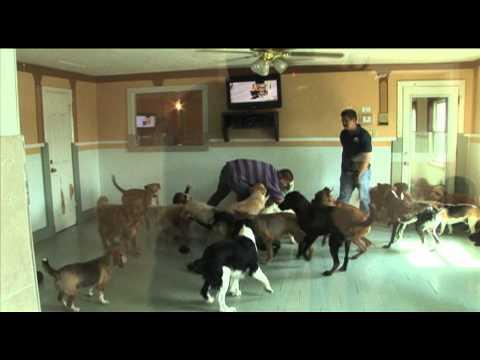 The dog house pet salon 15 sec advertisement popscreen for The dog house pet salon