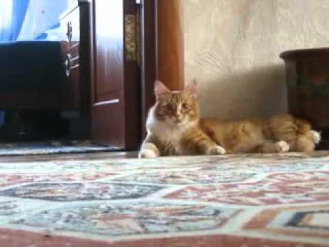 Franken - Cat ( Funny Scared Cat ) | PopScreen