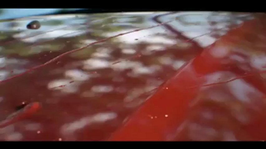 izmir araba kiralama - Ford Focus | PopScreen
