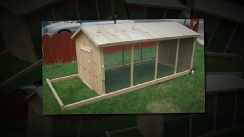Hen House Plans Nz Home Photo Style