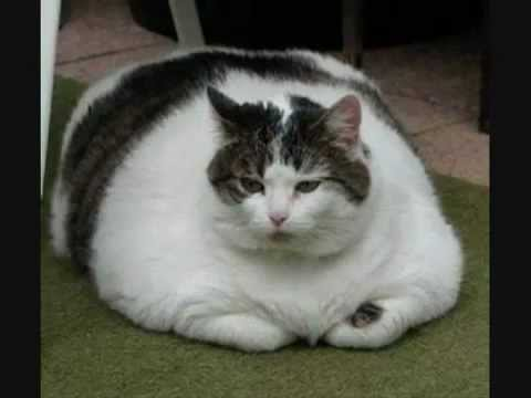 Cats Ugnyowdkakxpzfex Funny Pictures Fat Dogs Jpg