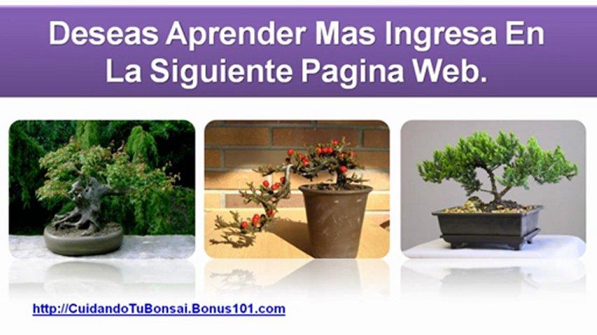 Cuidados del bonsai como cuidar un bonsai popscreen - Como cuidar un bonsai ...