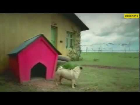 Hutch  on Hutch Vodafone India Ad By Hutch Dog   Funny Ad   Popscreen