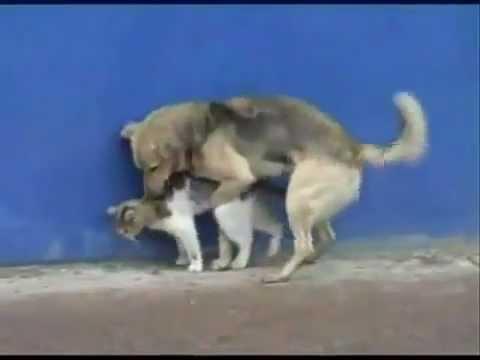 Perro y Gato Follando: Dog & Cat | PopScreen
