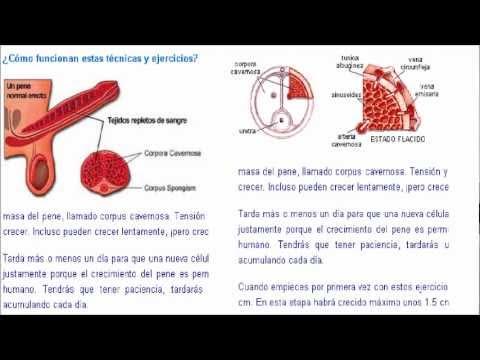 formas para hacer crecer el pene
