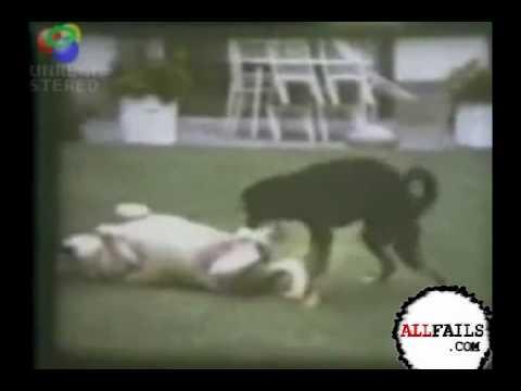Interspecies Sex FAIL | PopScreen