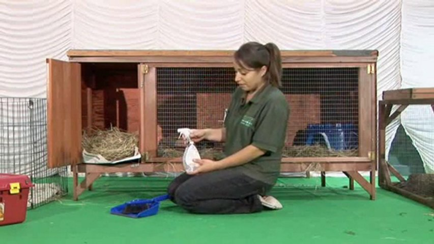 Two kittens playing in guinea pig cage popscreen for How to clean guinea pig cages