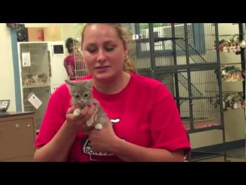 Corinne T. Smith Animal Center-up for adoption | PopScreen