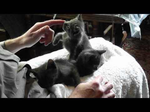 Lap Kittens | PopScreen