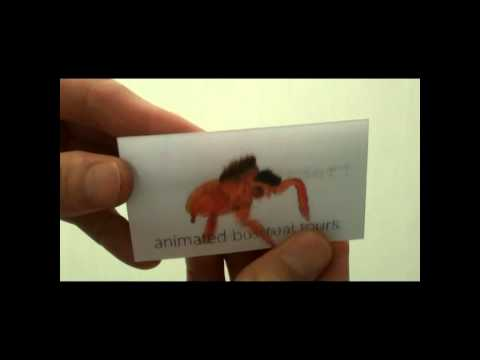 Animated Business Cards Jumping Spider Design