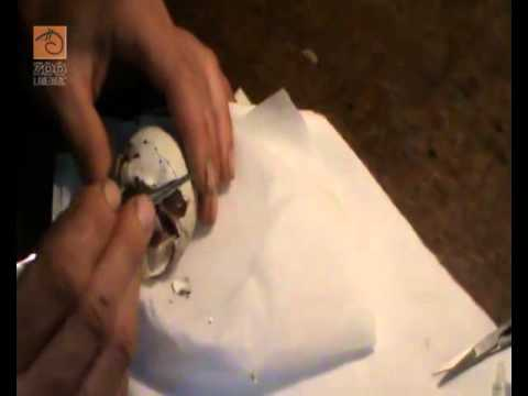 První umělý odchov orla křiklavého na světě | PopScreen