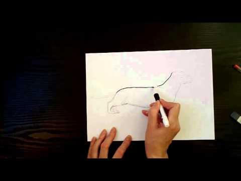 Как нарисовать собаку (таксу). How to draw a dog (Badger - Dog) | PopScreen