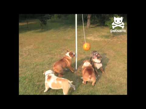Big bulldogs play tether ball | PopScreen
