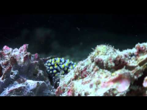 Living Together - A guide to symbiosis on coral reefs | PopScreen