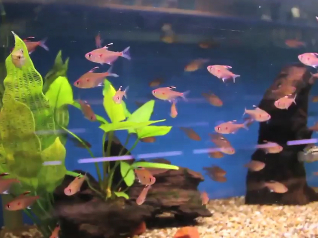 Cool Pet Fish : eGtncXd2MTI=_o_cool-pet-stores-the-wet-spot-tropical-fish.jpg