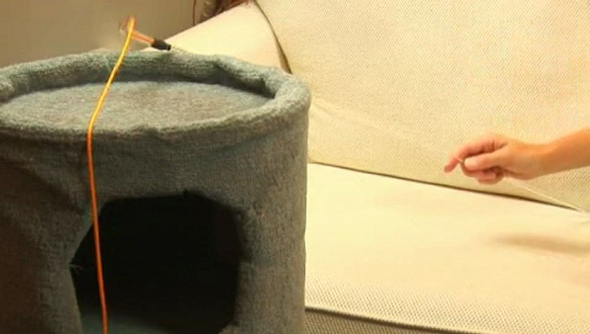 How to Fix Bad Cat Behavior | PopScreen
