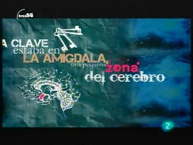 La amigdala cerebral | PopScreen