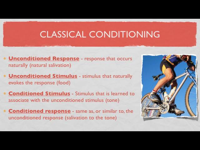 Lecture On Classical Conditioningml In Scheidlerathub