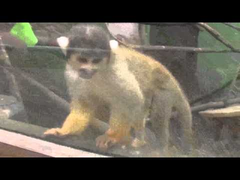 Funny Old Spice Monkey Commercial Popscreen