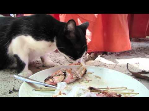 Cat Eating Fish Popscreen