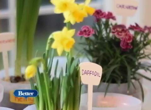Indoor gardening activities for kids popscreen for Indoor gardening lesson