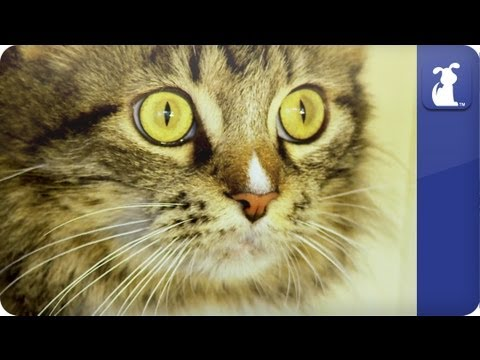 Kitten freaks out at sneeze - Awkward Pet Moments | PopScreen